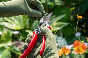 Los 10 mejores guantes de jardinería
